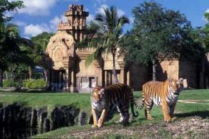 zoo_miami