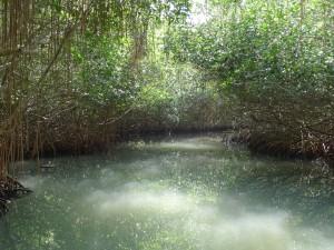 Bosques de Mangles